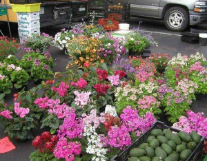 flowers at Hillcrest Farmers market